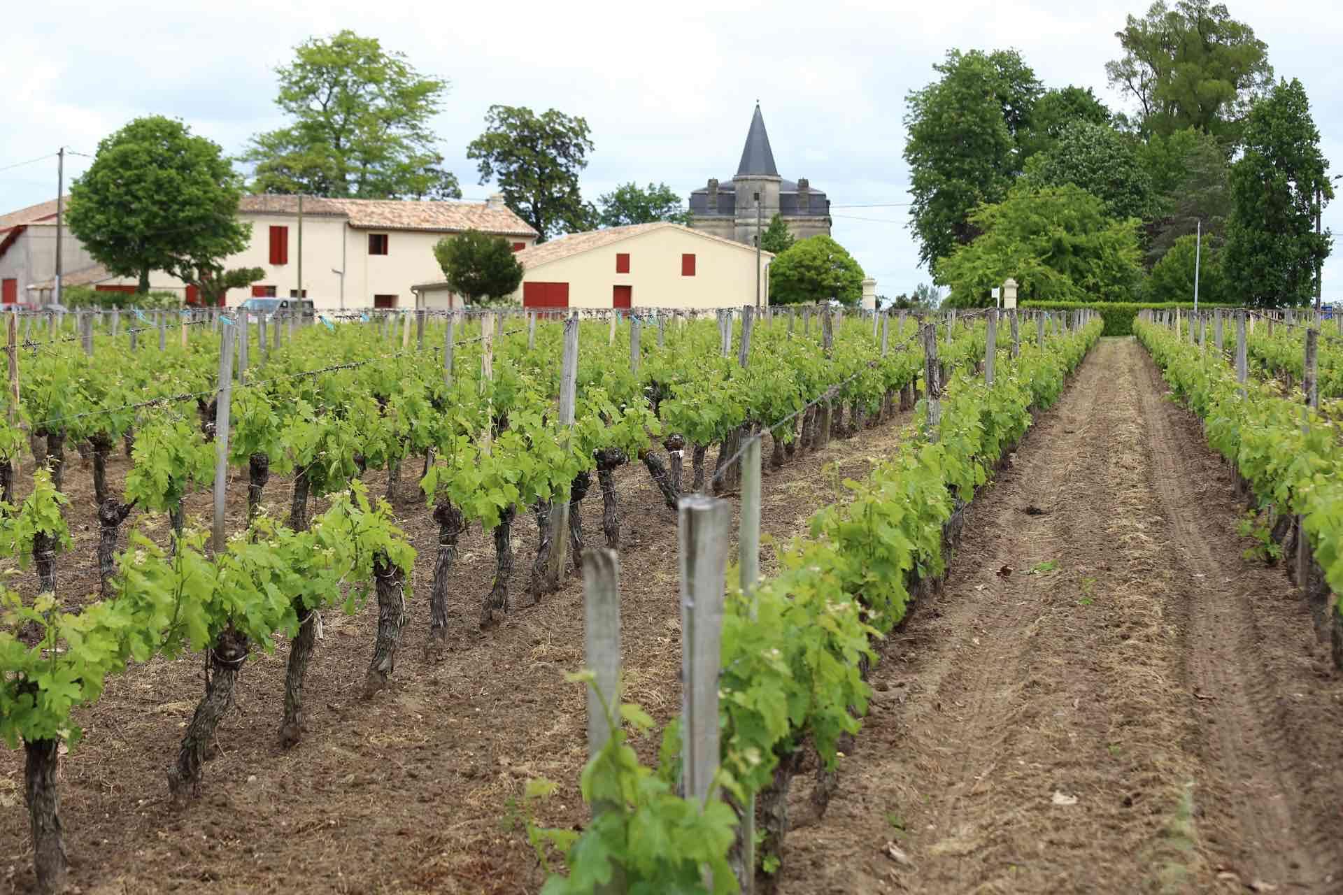 Château Yon Figeac - アペロ ワインバー オーガニックワインxフランス家庭料理 - 東京都港区南青山3-4-6 / apéro WINEBAR - vins et petits plats français