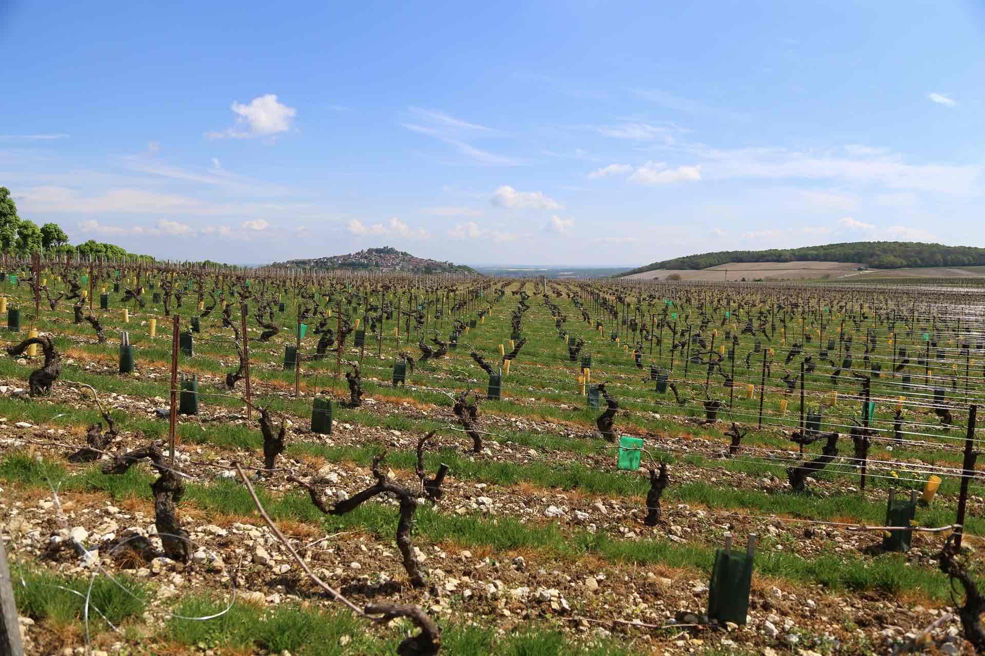 Domaine Balland Chapuis - アペロ ワインバー / apéro WINEBAR - vins et petits plats français - Minami Aoyama Tokyo