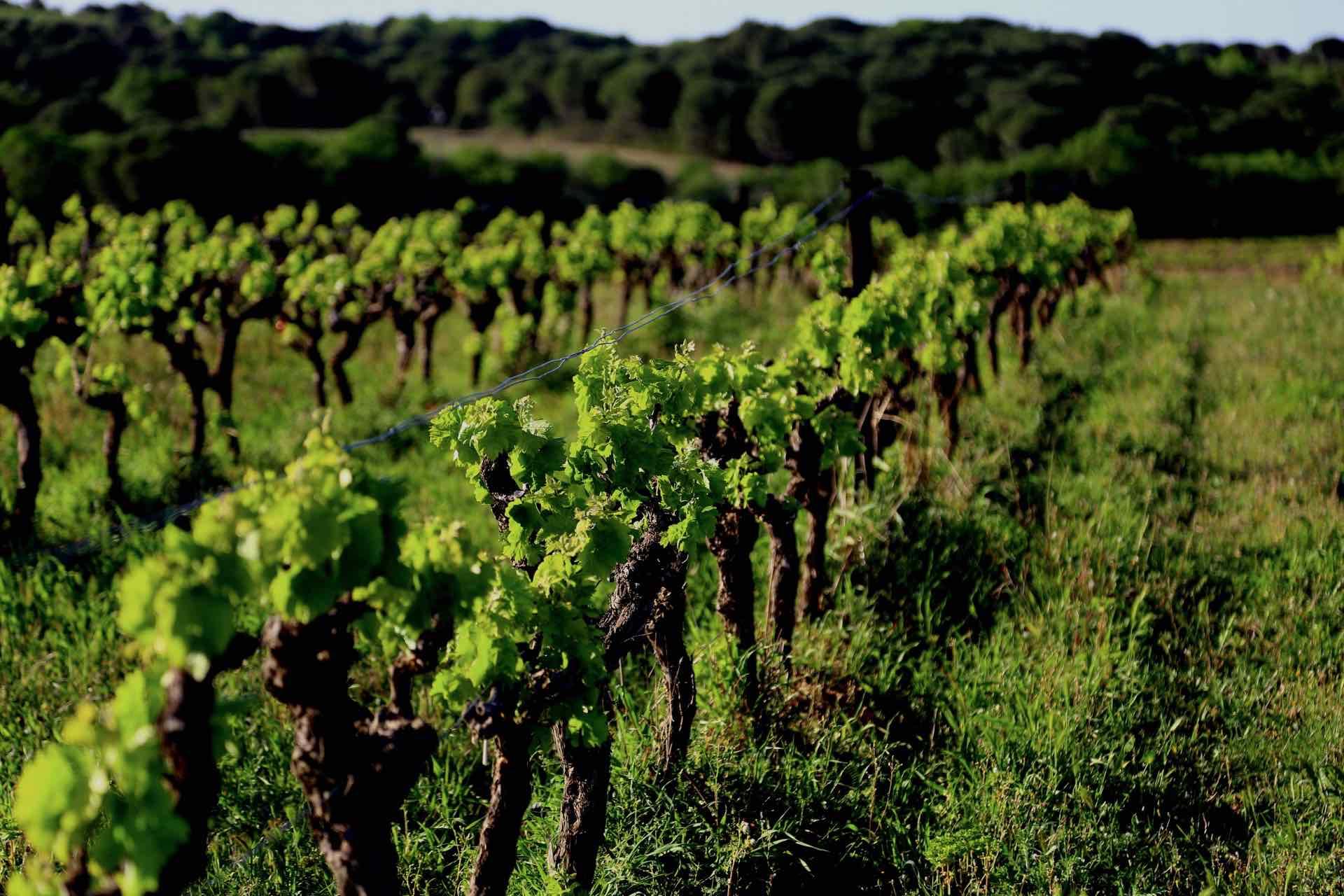 Domaine Clos des Américains - アペロ ワインバー / apéro WINEBAR - vins et petits plats français - Minami Aoyama Tokyo