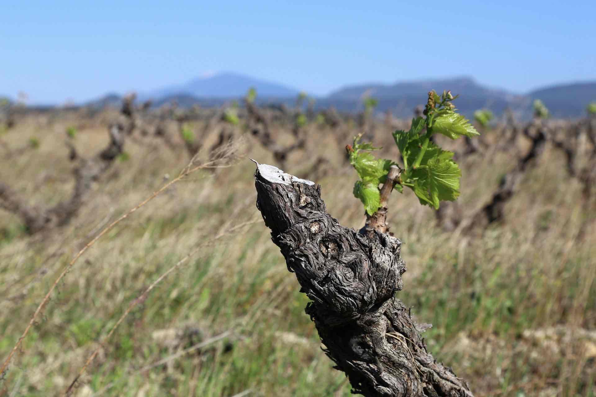 Domaine des Amadieu - アペロ ワインバー / apéro WINEBAR - vins et petits plats français - Minami Aoyama Tokyo