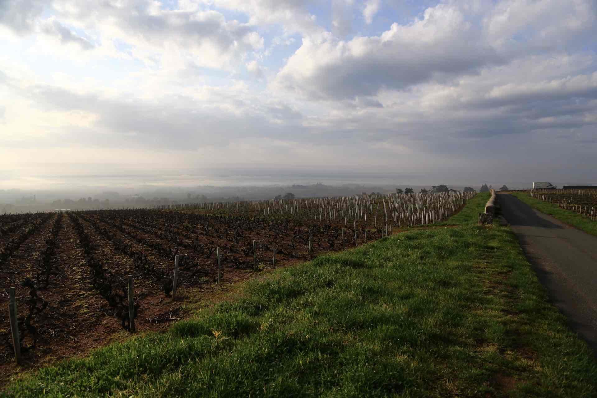 Domaine Michel Guignier - アペロ ワインバー / apéro WINEBAR - vins et petits plats français - Minami Aoyama Tokyo