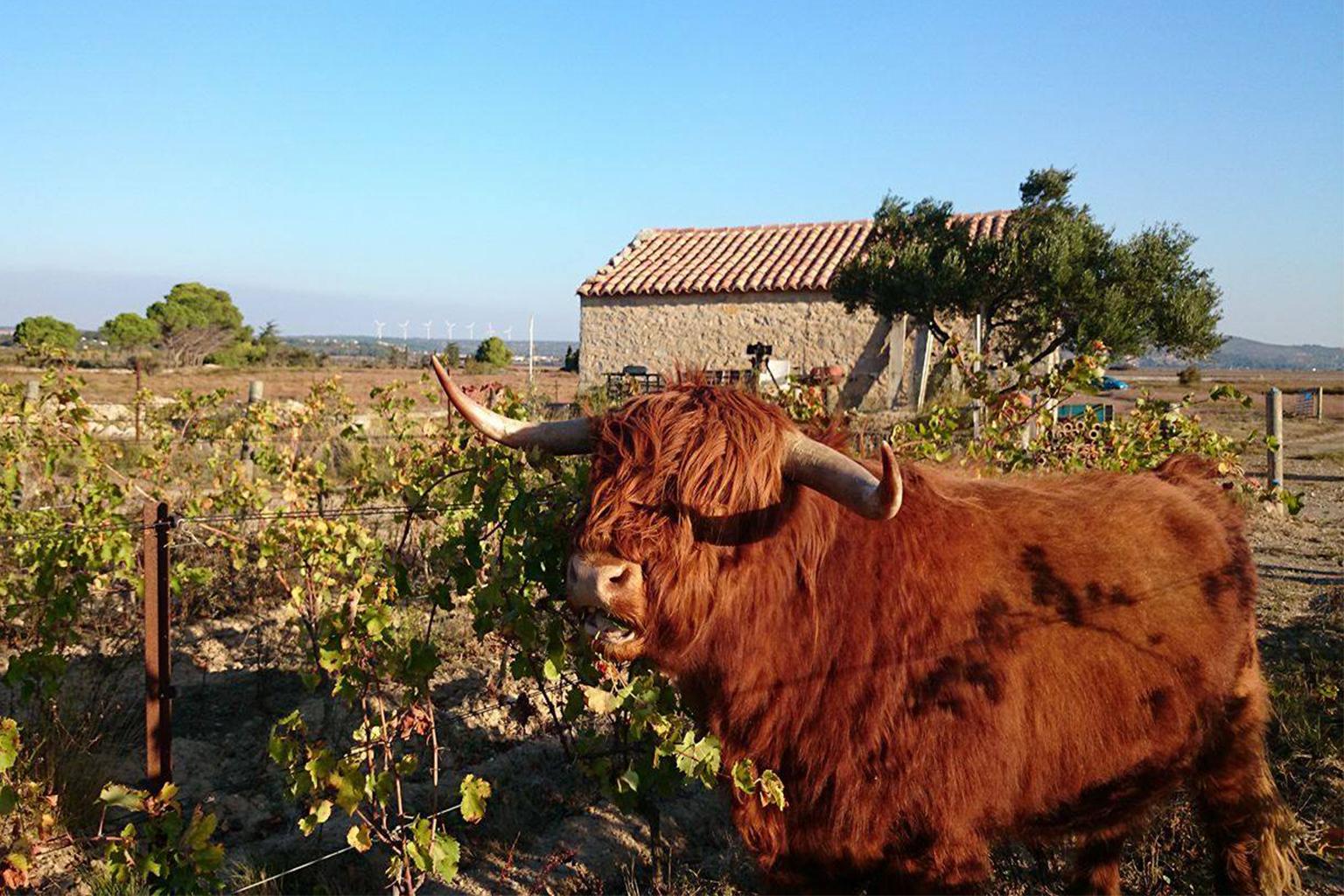 Domaine Mamaruta - アペロ ワインバー / apéro WINEBAR - vins et petits plats français - Minami Aoyama Tokyo