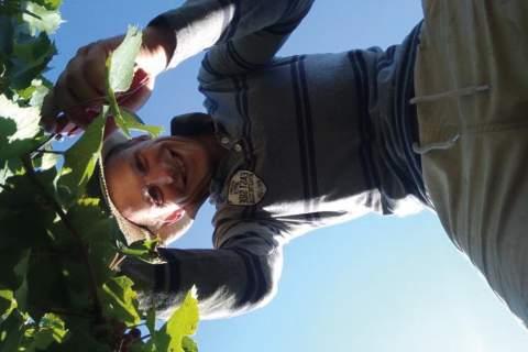 Domaine Peyres Roses - アペロ ワインバー オーガニックワインxフランス家庭料理 - 東京都港区南青山3-4-6 / apéro WINEBAR - vins et petits plats français
