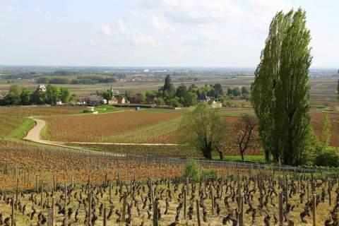 Domaine du Prieuré - アペロ ワインバー オーガニックワインxフランス家庭料理 - 東京都港区南青山3-4-6 / apéro WINEBAR - vins et petits plats français