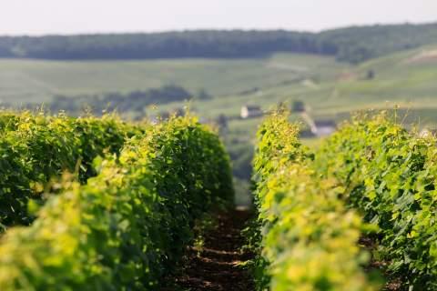 Domaine Ulysse Collin - アペロ ワインバー オーガニックワインxフランス家庭料理 - 東京都港区南青山3-4-6 / apéro WINEBAR - vins et petits plats français