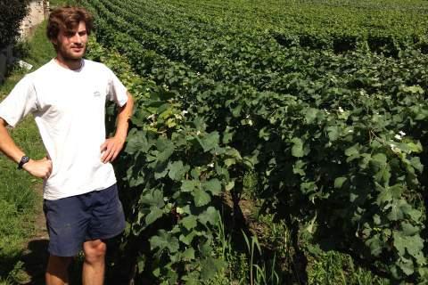 Domaine Clément Perseval - アペロ ワインバー オーガニックワインxフランス家庭料理 - 東京都港区南青山3-4-6 / apéro WINEBAR - vins et petits plats français