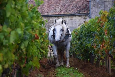 Château Le Puy - アペロ ワインバー オーガニックワインxフランス家庭料理 - 東京都港区南青山3-4-6 / apéro WINEBAR - vins et petits plats français