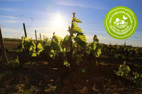 The HVE Certification - アペロ ワインバー オーガニックワインxフランス家庭料理 - 東京都港区南青山3-4-6 / apéro WINEBAR - vins et petits plats français