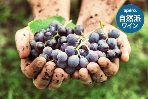 Apero's Natural Wines - アペロ ワインバー オーガニックワインxフランス家庭料理 - 東京都港区南青山3-4-6 / apéro WINEBAR - vins et petits plats français
