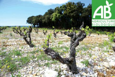 Organic Farming - アペロ ワインバー オーガニックワインxフランス家庭料理 - 東京都港区南青山3-4-6 / apéro WINEBAR - vins et petits plats français