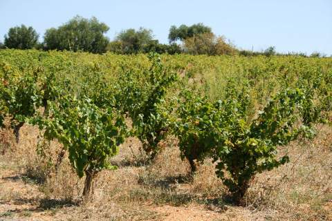 Domaine de la Garance - アペロ ワインバー オーガニックワインxフランス家庭料理 - 東京都港区南青山3-4-6 / apéro WINEBAR - vins et petits plats français
