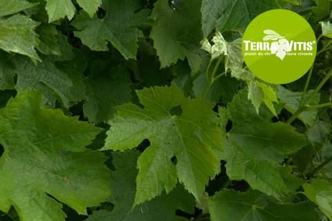 The Terra Vitis Certification - アペロ ワインバー オーガニックワインxフランス家庭料理 - 東京都港区南青山3-4-6 / apéro WINEBAR - vins et petits plats français