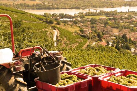 Vignobles Verzier Chante-Perdrix  - アペロ ワインバー オーガニックワインxフランス家庭料理 - 東京都港区南青山3-4-6 / apéro WINEBAR - vins et petits plats français
