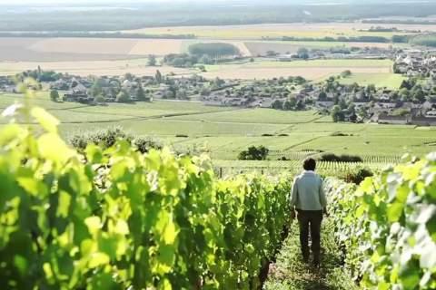 Domaine Tollot Beaut - アペロ ワインバー オーガニックワインxフランス家庭料理 - 東京都港区南青山3-4-6 / apéro WINEBAR - vins et petits plats français